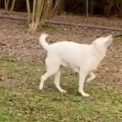 Blind And Deaf Dog Follows Her Nose To Find Her Owner