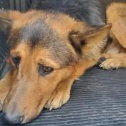 He knows he is unwanted – will anyone step up to save this dog?