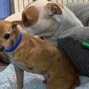 Senior dog and her closely bonded tripod have lost their home