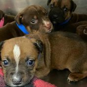 Oklahoma Humane Society caring for 7 orphaned puppies after mom froze to death