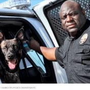 Police officer gets brief suspension after letting his K9 partner die in hot car