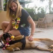After Years Of Brave Service, Former Military K-9 Flown 4,000 Miles To Reunite With Her Handler