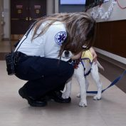 'Hero' Service Dog Is Given Proper Send Off After Comforting Hospital Staff During Pandemic