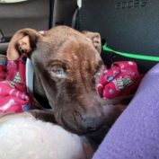 Heartbreaking: Blind Benny dumped at shelter after he stopped eating a month ago