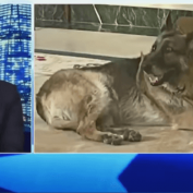 News host goes too far, mocking President Biden's senior German shepherd