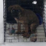 Caged puppy abandoned in the snow outside of Ohio animal shelter