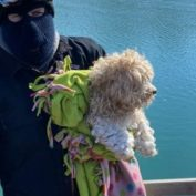 Small dog stranded on frozen Detroit River four days miraculously rescued