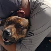 Tearful owner surrendered his dog to shelter after landlord said no