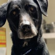 Mac was dumped in the middle of nowhere because he was old; Now he is set to die
