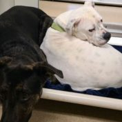 Everyone loves the bonded dogs, but no one wants to adopt them