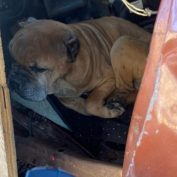 Six dogs covered in snow with one dog deceased found at Houston body shop
