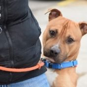 Just one more chance for NYC shelter dog who holds on tight with his paws