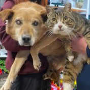 "Blind Dog And His 'Seeing Eye' Cat Get Adopted Into The ""Perfect Home"" Together"