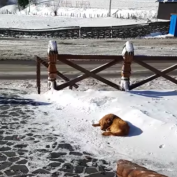 Abandoned Dog Slept In The Snow For Days Until Rescuers Arrived