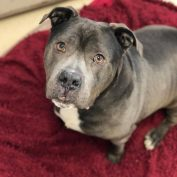 Shelter heartbroken after senior dog becomes homeless for the second time – through no fault of his own