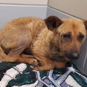 Shelter dog too terrified to eat or move – now she is on list to be put down