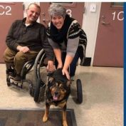 Bandit, the paralyzed 'jail dog' has passed away