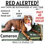 Dog at shelter since 2019 on 'red alert' and he can be euthanized at any time