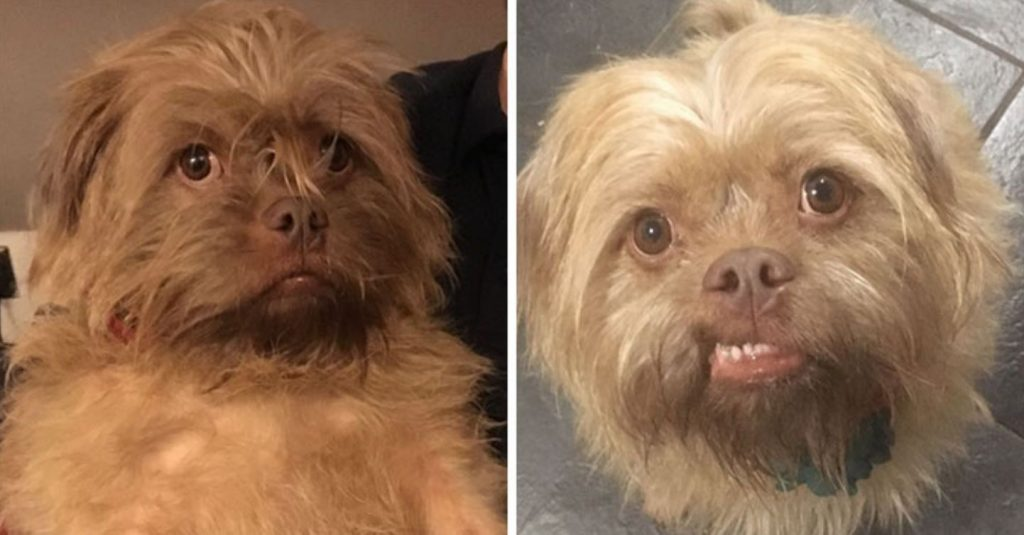 People Say These Dogs Have A Very Human-Like Look On Their Faces