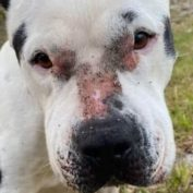 Urgent: Help needed for battered and bruised pup dumped on side of the road
