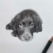 Artist Makes Realistic Pet Portraits Using Only A Pencil, Here Are The Best 49 Works