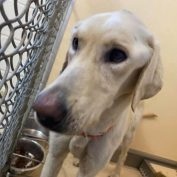Texas stray starved to near death who still wags his tail needs emergency help