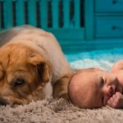 Dog Cries Every Time The Baby Cries