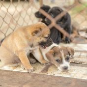 Missouri Has Led The U.S. In Puppy Mills For Nearly A Decade Running