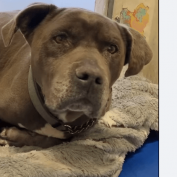 Sweet senior dog, 'Billy,' has been waiting over a month for someone to notice him at busy shelter