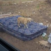 Dog waited on old mattress along deserted South Texas road for owner to return