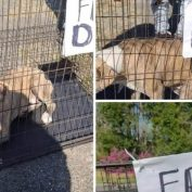 Dog, discarded with a 'free dog' sign, now sits in lonely kennel run, crying all day