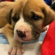 Abandoned puppy hiding under mobile home for days tangled in rubbish rescued