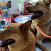 Hong Kong shelter in critical financial need leaving lives of 130 dogs unknown