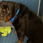 Heartbroken young dog mourns over deceased owner but NYC shelter scheduled to euth' him today