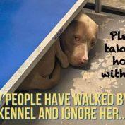 55+ days at Texas shelter wearing on sweet but shy dog 'Hazel'