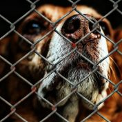 """Speak for Me,"" A Poem Written In Protest Of Animal Abuse"