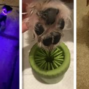 20+ Problem-Solving Pet Products From Amazon You'll Wish You'd Thought Of First