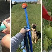 "18 Dog Products On Amazon Reviewers Have Literally Called ""Genius"""