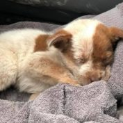Puppy found locked in a rusted crate in middle of trash heap