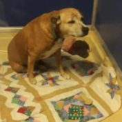 Dog's family named her 'Princess' and then dumped her at Florida high kill shelter