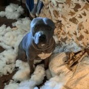 Rescue pooch with anxiety separation issues ripped up his owner's couch and chewed a mess of stuff