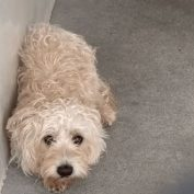 Rescue Only – Pup is very upset at shelter and needs help to leave