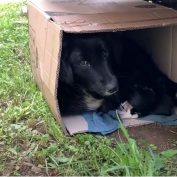 Dog Hides With Her Puppies Hoping Help Would Arrive