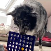 Dog Loves To Play Connect Four And Jenga With His Owners