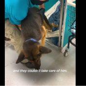 Dog On Euthanasia List Learns How To Walk Again