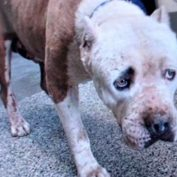 Woman's heart broken when dog arrives at shelter looking defeated and lost