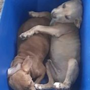 Dying puppies abandoned like trash in Houston
