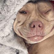 'World's Happiest Dog' has stolen hearts from social media