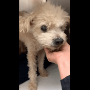 15 year old dog arrived as a 'stray' weeks ago, and nobody came to the shelter to get him