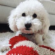 Four employees from Pittsburgh PetSmart face felony animal cruelty in death of poodle